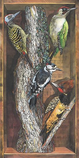Woodpeckers of the World, Bird Print