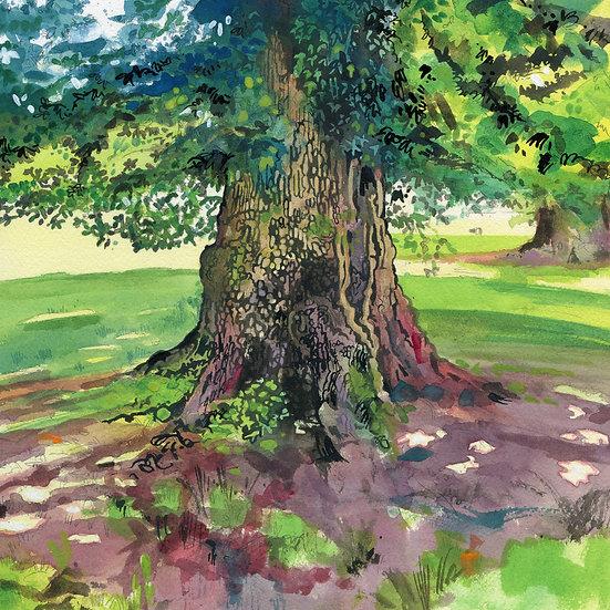 English Oak Tree 2, Print