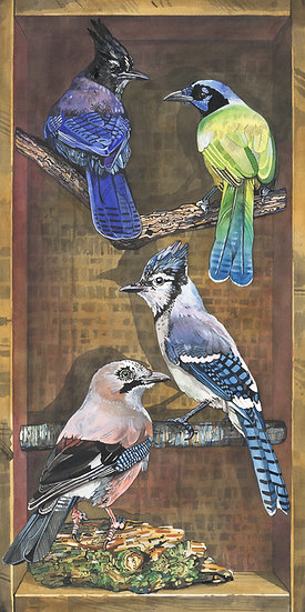 Jays of the World, Bird Print