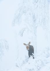 Orignal_hiver_8_2021.png