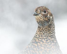 Oiseau_tetras_7_2020.png