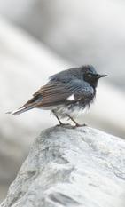 Oiseau_paruline_1_2021.png