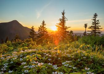 Paysage_montagne_14_2019.png