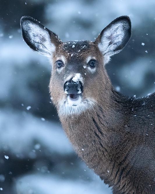 Heureuse sous la neige