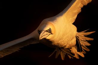Oiseau_fou_3_2020.png
