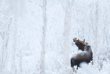 Orignal_hiver_5_2021.png