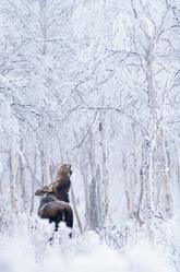 Orignal_hiver_10_2021.png