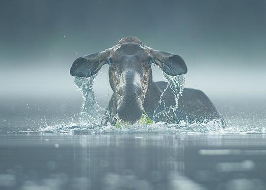Hors de l'eau