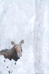 Orignal_hiver_7_2021.png