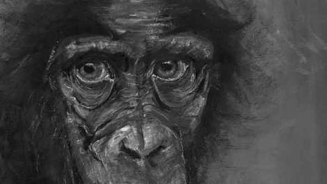 B&W Chimp.jpeg