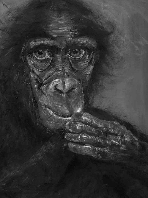 Black & White Chimp