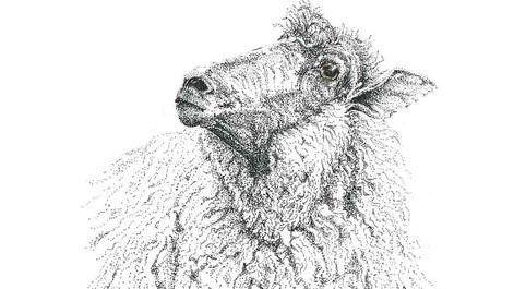sheep-new004.jpg