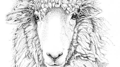 SheepLR.jpg