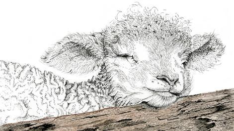 sheep on log.jpg