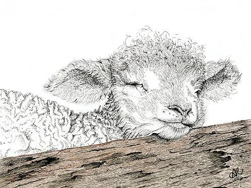 Lamb on log