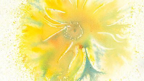 Yellow-FlowerLR.jpg