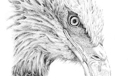 eagle002.jpg