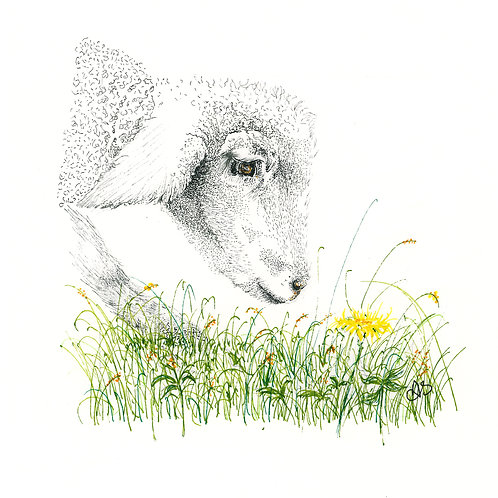 Lamb with flower