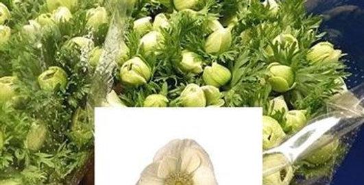 Anemone marianne white