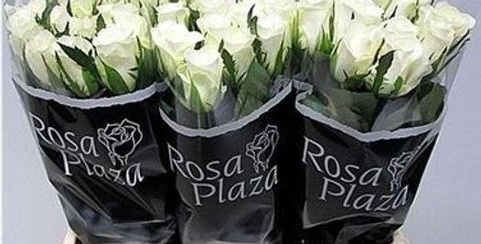 Rosa gr akito