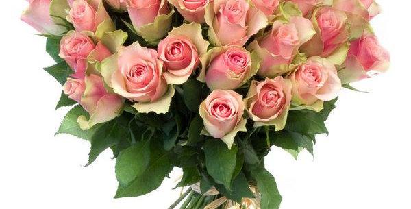 Belle rosa rose