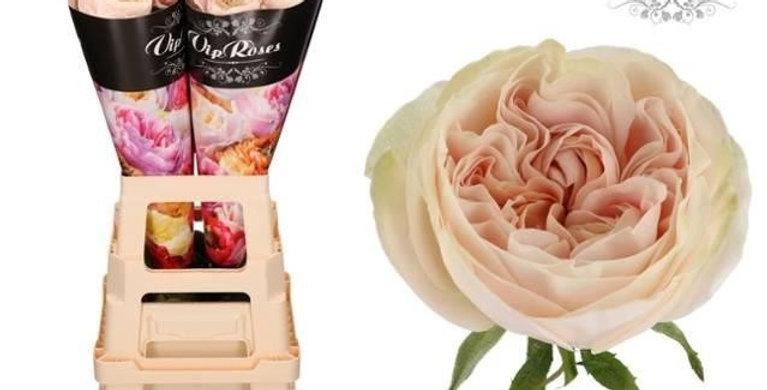 996 Rosa gr chiffon