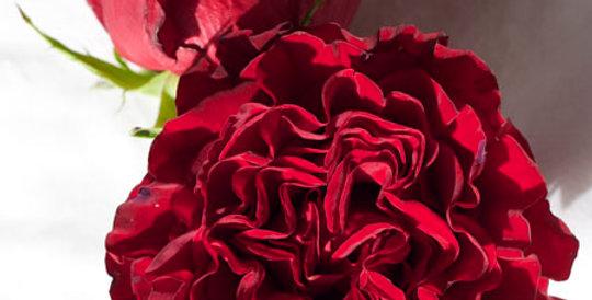 Rosa gr hearts