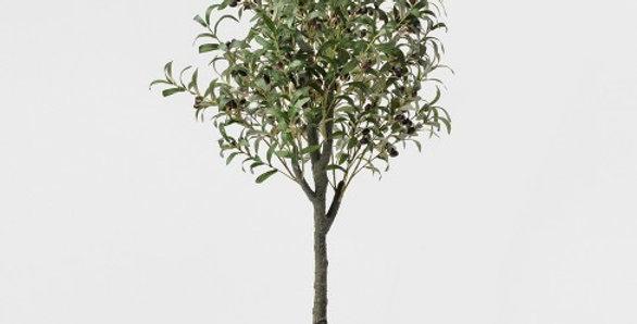 Olīvu koks 115 cm