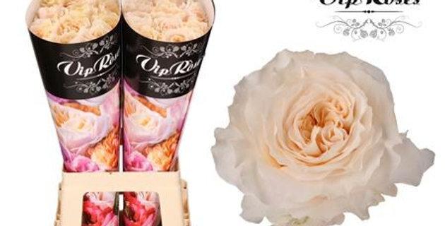 Rosa gr cream fragrance+