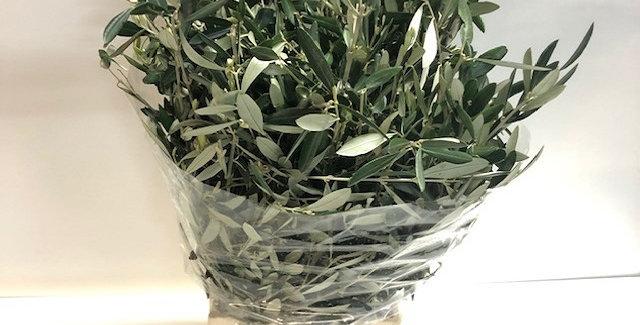 Blad olive per bunch
