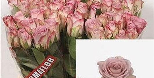 Rosa gr memory lane