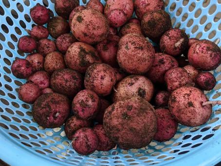 Les bienfaits de la pomme de terre pour la peau