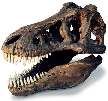 Tyrannosaurus Skull Large