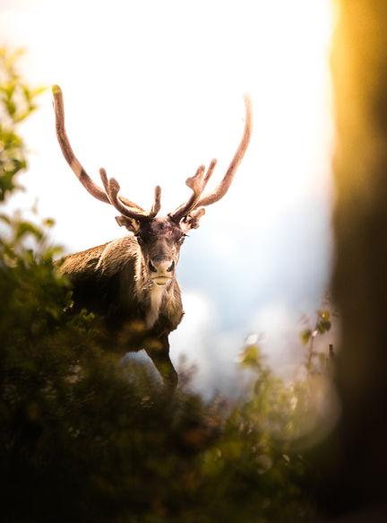 Doğadaki boynuz