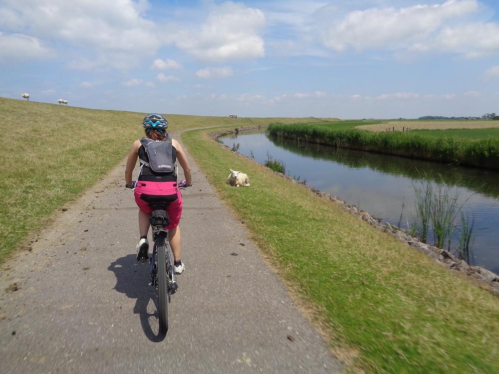 Fietsreis langs het water Friesland