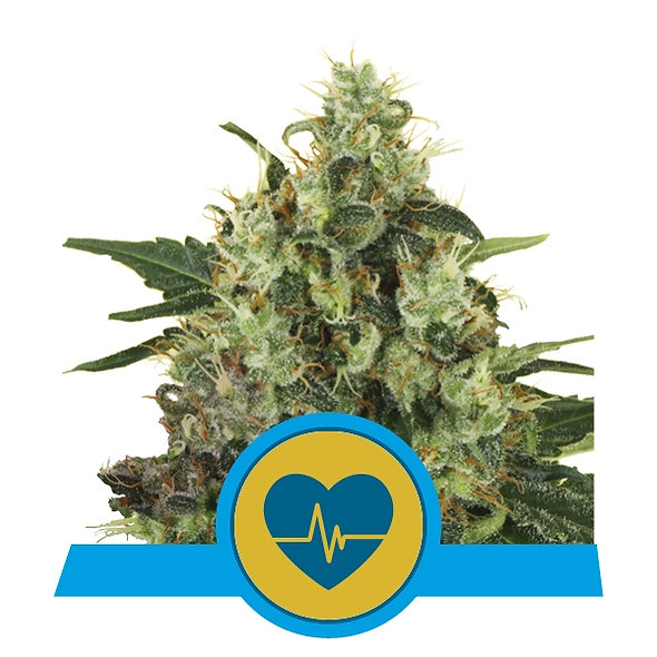 Medizinische Mass CBD
