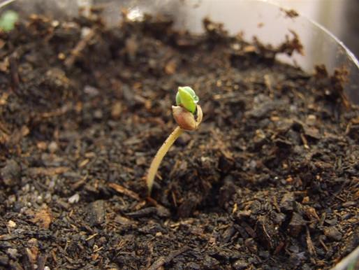 Was ist VPD, und wie beeinflusst es das Indoor Growen?