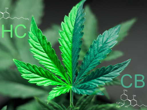 Cannabis: CBD nicht gleich THC – EuGH beschränkt Handelsbeschränkungen