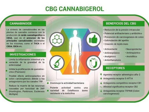 Cannabigerol (CBG): Ein Cannabinoid mit therapeutischem Potenzial