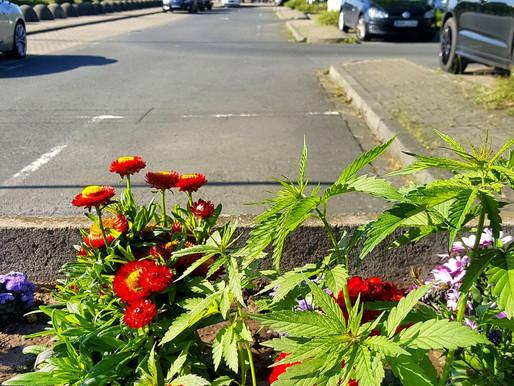 Cannabis-Verfassungsbeschwerde beim Bundesverfassungsgericht eingereicht