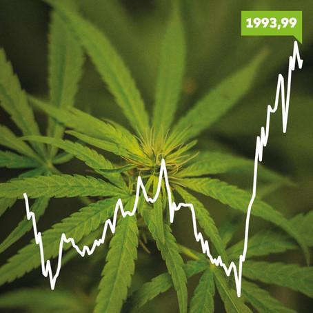 Was ist handgemachtes Cannabis und worin unterschiedet es sich von kommerziellem?
