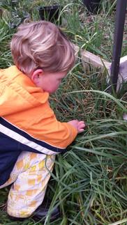 A Slug Garden