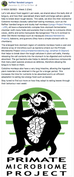 PMP mentioned by Raffles' Banded Langurs 5-Week Study Series. Thanks Andie Ang (https://www.andi