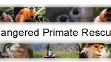 New PMP partner: the Endangered Primate Rescue Center