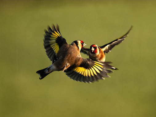 'Fight in flight' by Malachy Coney