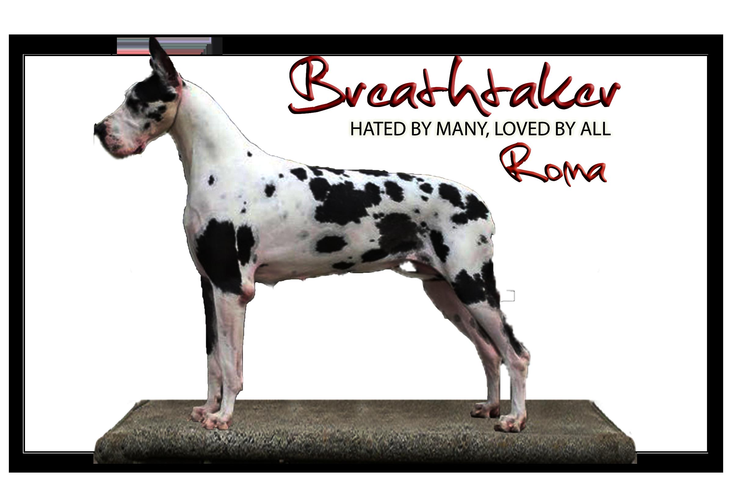 roma RECORTADO web