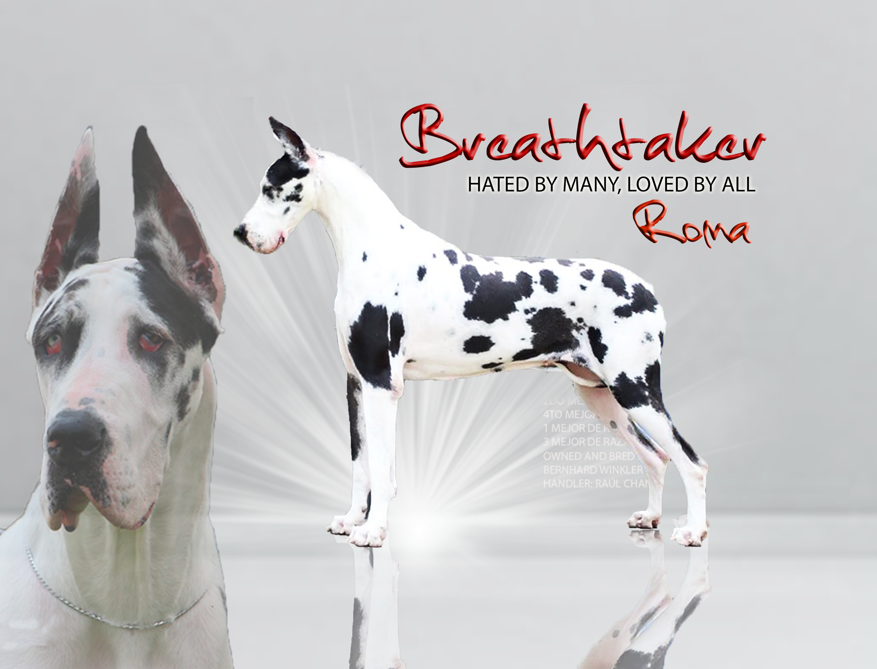 GRAN DANÉS Breathtaker Roma