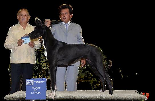 bruixa campeonatos.png