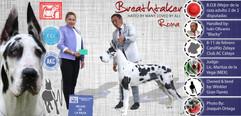 Winkler Breathtaker ROMA