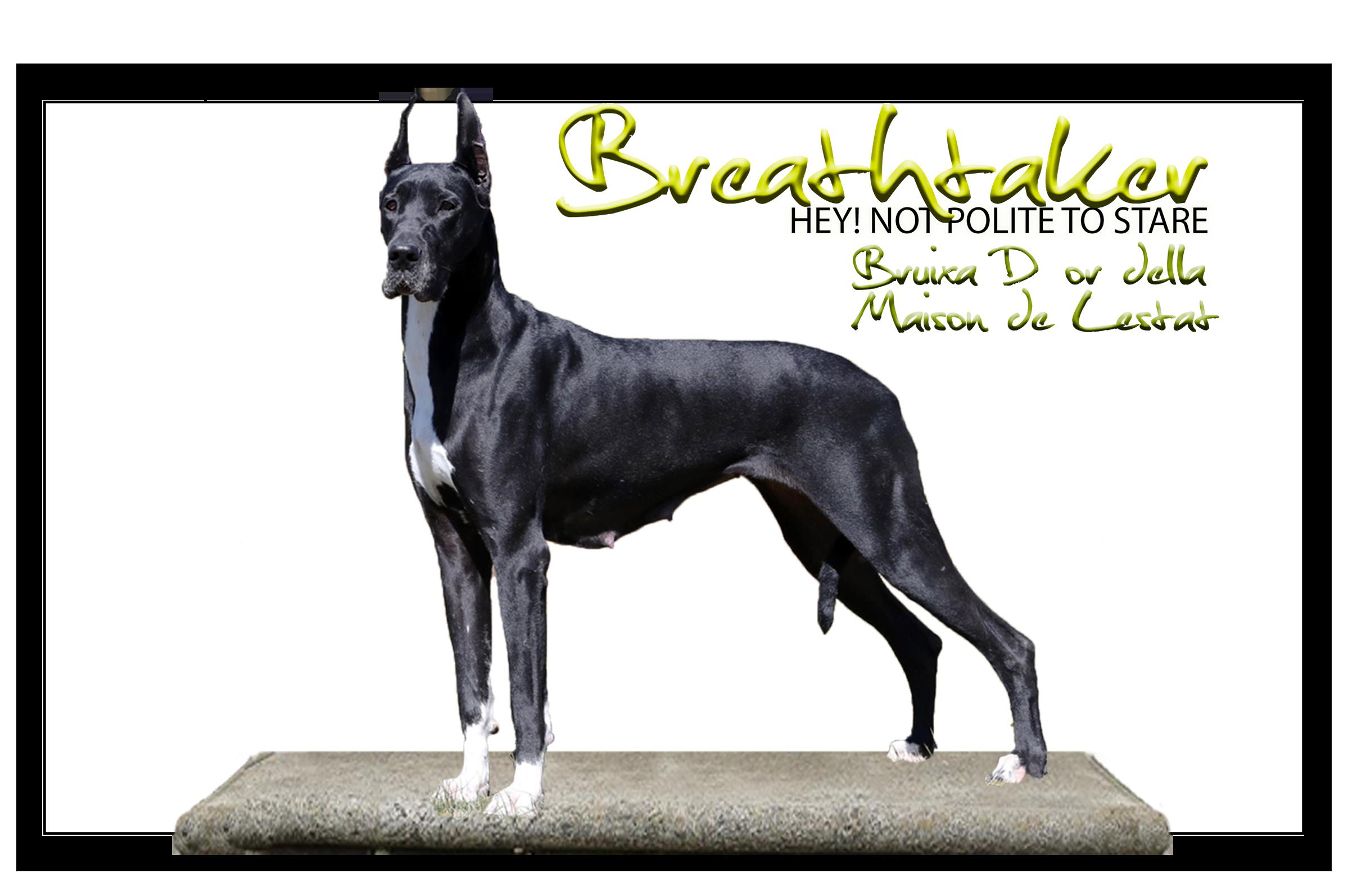 Breathtaker Bruixa D´or de la Maison